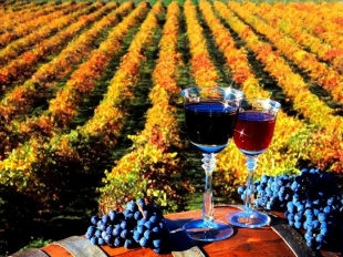 festivalul vinului tulburel