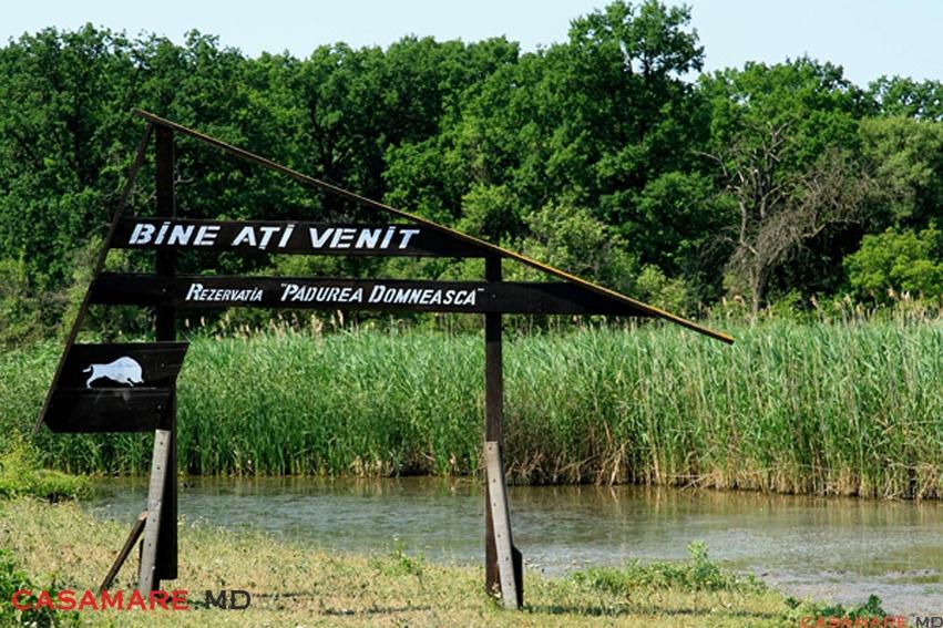 Дело Pădurea Domnească: Апелляционная палата Бельц вынесла решение