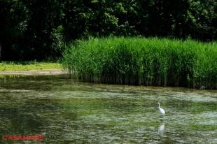 Rezervatia Padurea Domneasca | Пэдуря Домняскэ - Научный заповедник
