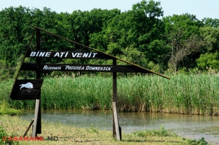 Rezervația Științifică Padurea Domneasca