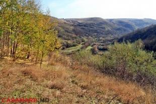 ''La 33 de Vaduri'' landscape reserve