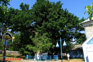stejarul lui stefan cel mare