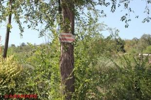 emil racovita - pestera surpizelor
